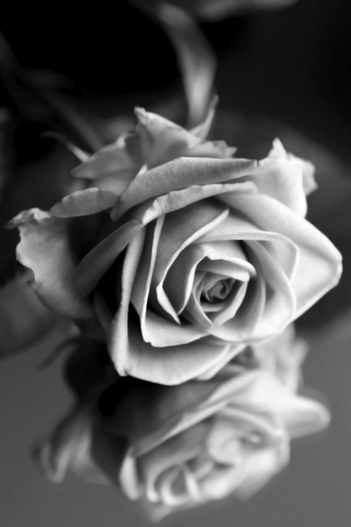 Black and white rose 2 simstudio51 wallpapers floors photowalls